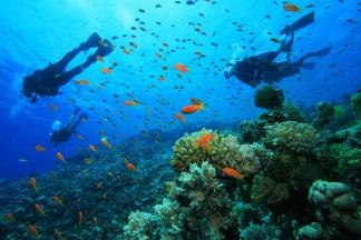 roatan_diving_lg