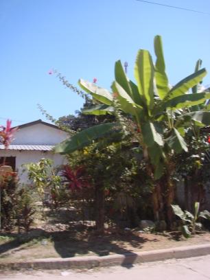 Tela - Costa Atlantica - Honduras - 2009 (11)