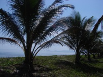 Tela - Costa Atlantica - Honduras - 2009 (77)