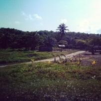 Tela, Honduras - 09 - 8 - 2013 (51)