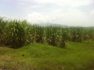 Tela, Honduras - 09 - 8 - 2013 (70)