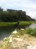 Tela, Honduras - 09 - 8 - 2013 (95)